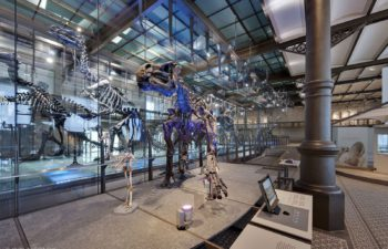 Museum of natural sciences in Brussels